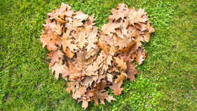 Love autumn leaves. Heart over grass made by colorful autumn leaves Royalty Free Stock Photo