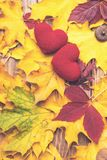 Love in autumn. Two hearts on leaves background. Autumn mood. Seasonal sales. Autumn holiday. Fallen leaves. Autumn background. stock image