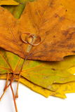 Love autumn Royalty Free Stock Images