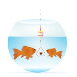 Love bait. Vector illustration of  two little gold fish with bait in a shape of a heart Royalty Free Stock Image