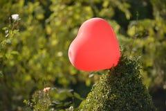 Love balloon in a garden Stock Images