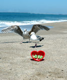 Love at the beach 3. Two seagulls and a red heart at the beach stock image