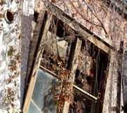 Desolate Broken Windows. Love the beauty of the destruction this old building has suffered. The windows, covered in vines, tell the story of a building that has royalty free stock images