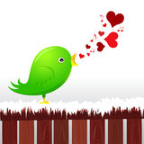 Love bird Stock Image