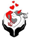 Love BIrd. A illustration of Valentina Card Design with birds Royalty Free Stock Photo