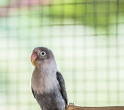 Love bird. Beautiful lonely love bird, cute Royalty Free Stock Photos