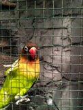 Love Bird stock photo