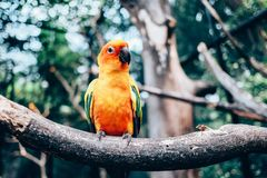 Love bird. On the branch Royalty Free Stock Photo