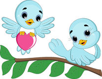 Love Bird Couple Royalty Free Stock Images