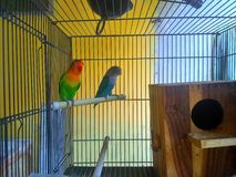 Love bird. Love in my bird Royalty Free Stock Photo