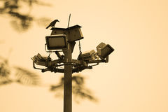 Love Bird. Is seaching a way of fly and waiting to reach their goal Stock Photography