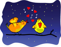 A love bird song. Birds in love. Love song Royalty Free Stock Photo