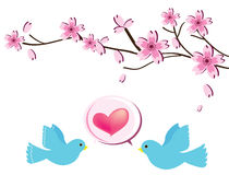Love bird2. The two cute love birdon white background Royalty Free Stock Photos