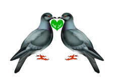 Love birds Stock Images