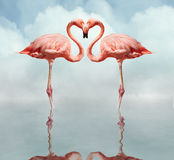 Love Birds. Pink flamingos making a heart shape in reflection pond Royalty Free Stock Photo