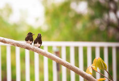 Love birds. Two birds with food in their beaks Royalty Free Stock Image