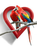 Love Birds. A couple of kissing parrots with a heart-shaped frame as background Stock Images