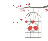 Love birds on cage Stock Images