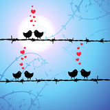 Love, birds kissing on branch Royalty Free Stock Images