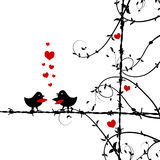 Love, birds kissing on branch Stock Photos