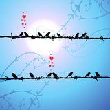 Love, birds kissing on branch Royalty Free Stock Photos