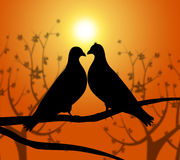 Love Birds Represents Heart Compassion And Boyfriend Royalty Free Stock Photos