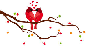 Love Birds on Tree Branch Royalty Free Stock Photo