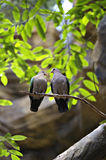 Love birds. Two birds sitting on a tree branch looking at each other Stock Images