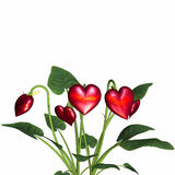 Love In Bloom 4 Royalty Free Stock Image