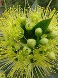 Love bloom Stock Image