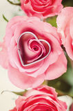 Love!. Blooming roses with a heart shaped cutter Stock Photography