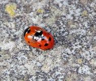 Love bugs Stock Photo