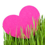 Love card decorated with heart on green grass Stock Photos