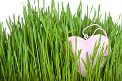 Love card decorated with heart on green grass Royalty Free Stock Image
