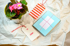 Love cards and Begonia pot on the wrinkle white paper Royalty Free Stock Photos