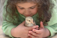 Love and care. A little girl has a chick in her hands and watches it with love and care Royalty Free Stock Photography