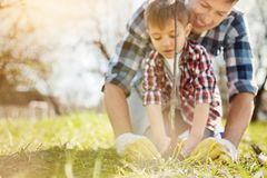 Pleasant father and his son planting a tree. With love and care. Close up of a nice little boy and his father planting a tree while being involved in gardening royalty free stock photos