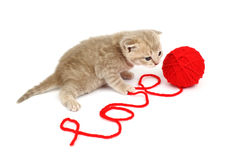 Love cat Royalty Free Stock Images