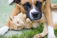 Love between cat and a dog Royalty Free Stock Photo