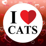 Love Cats Indicates Domestic Fabulous And Like Cat Royalty Free Stock Images