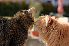 Love cats. Two cats with friends on a summer day Royalty Free Stock Photography