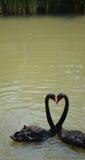 Love. From the China Guangzhou NanSha Water birds of the world Royalty Free Stock Photos