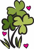 Love Clovers Stock Photography