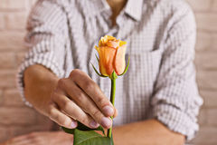 Love concept. Man holding orange rose in hands. Valentine`s postcard. Love concept. Man holding orange rose in hand. Valentine`s postcard. Women`s day. St stock photos