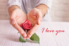 Love concept. Man holding orange rose in heart shaped hands. Valentine`s postcard Royalty Free Stock Photo