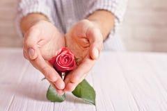 Love concept. Man holding orange rose in heart shaped hands. Valentine`s postcard Stock Image