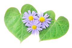 Love concept: pair of hearts from leaves and flower Stock Photo