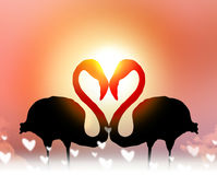 Love concept shape heart of couple flamingo at sunset. With copy space Stock Photography