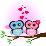 Love couple owl Stock Photography