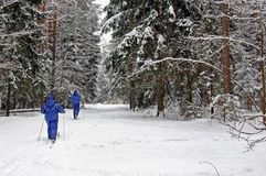Love couple skiing in forest on a lovely winter day . Cross-country skiing: love couple cross-country skiing on a lovely winter day Stock Photo